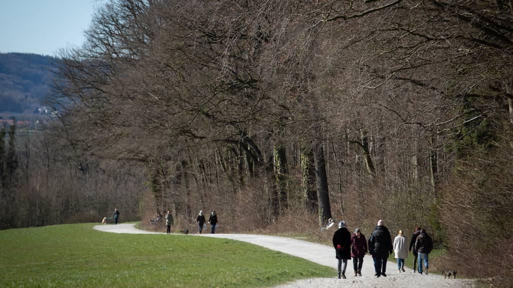 Spaziergänger findet Handgranate in einem Waldam Bodensee