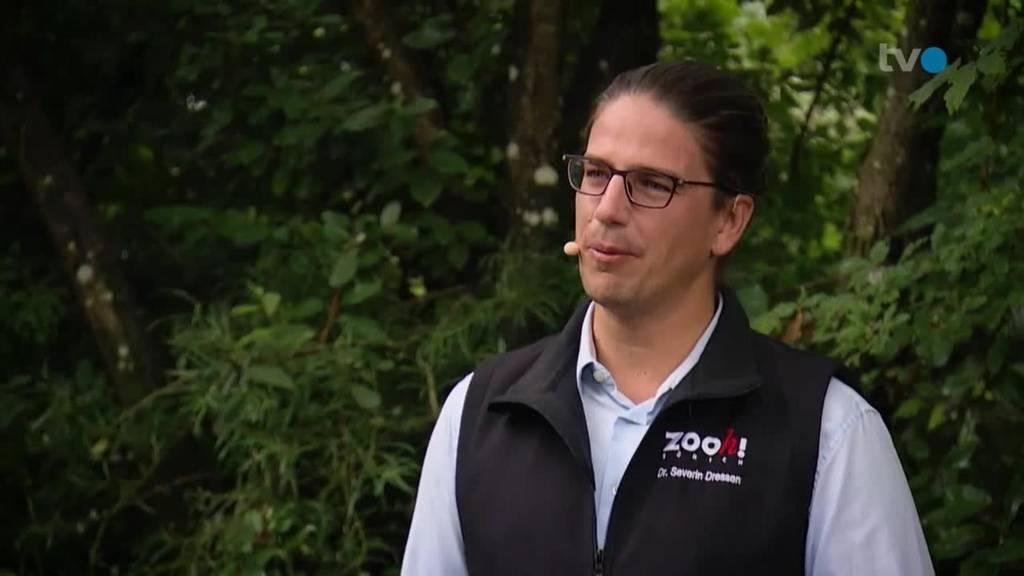 Severin Dressen, Direktor Zoo Zürich