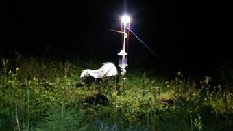 Mit solchen LED-Lampen testeten die Forscherinnen, welche Auswirkung künstliches Licht auf die Bestäubung hat.