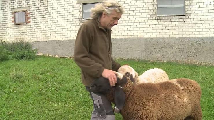 Schafzüchter Roland Zweifel mit den beiden Böcken, die ihm noch von den «Saaser Mutten» bleiben.