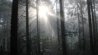 Der Wald dient auch als Schutz vor Naturgefahren.Christof Ramser