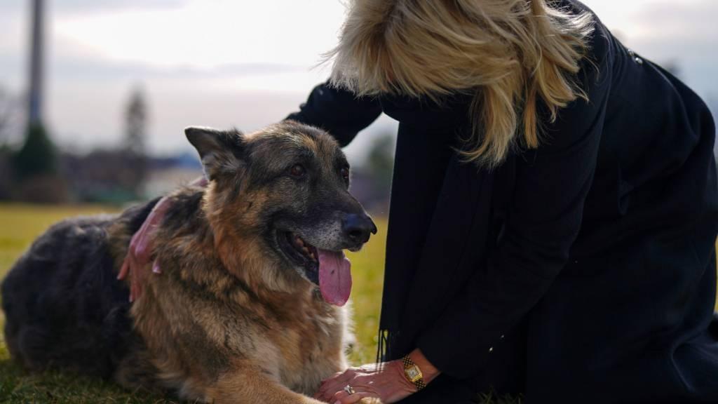 «First Dogs» Champ und Major ziehen ins Weisse Haus ein