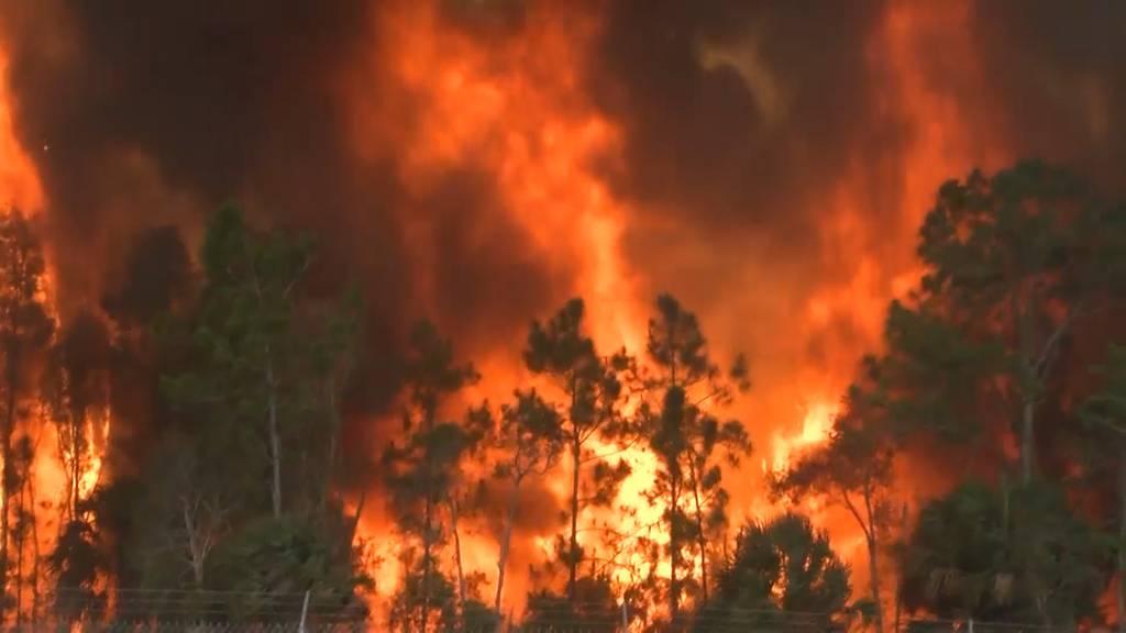 Waldbrand in Florida (USA): Anliegende Autobahn gesperrt