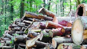Bild: Holzstapel im Leuziger Wald