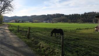 Auf dem Gebiet Hegmatte in Schöftland sollen neue Betriebsgebäude für die WSB entstehen. (Bild: Flurina Dünki)