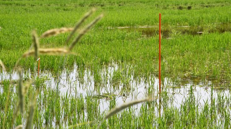 Das überschwemmte Gebiet ist interessant für Tierarten, die es sonst in unserer Region nicht mehr gibt.