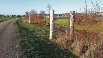 Die Totholzstelen an der Bünz sind gut für die Natur – könnten aber auch Kunst sein.