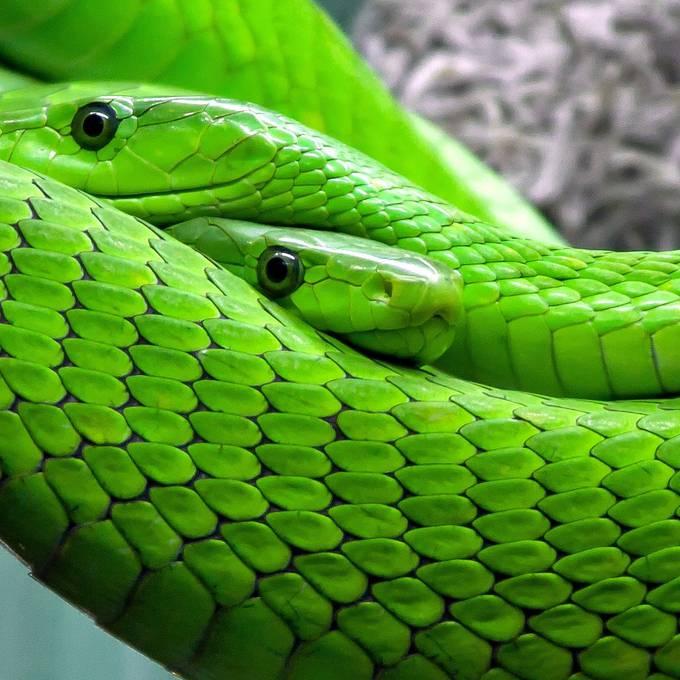 Im Zoo die Angst vor Schlangen und Spinnen verlieren