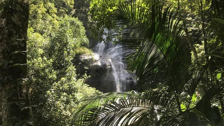 Imposanter Wasserfall im Regenwald.