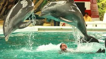 """Ehemalige Delfinbetreuerin: """"Medikamente wurden nicht serios verabreicht"""""""