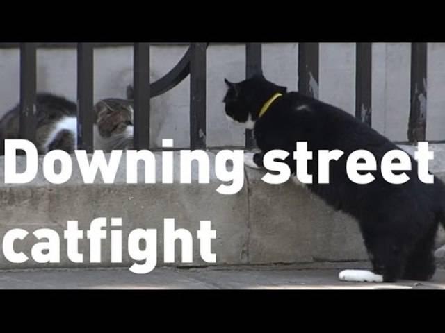 Downing Street Nr. 10: Theresa May zieht ein und Larry hat immer mal wieder mit Ausenministeriums-Kater Palmerston zu kämpfen.