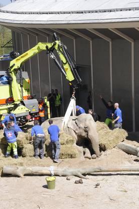 Die Feuerwehr musste der betagten Elefantenkuh beim Aufstehen helfen.