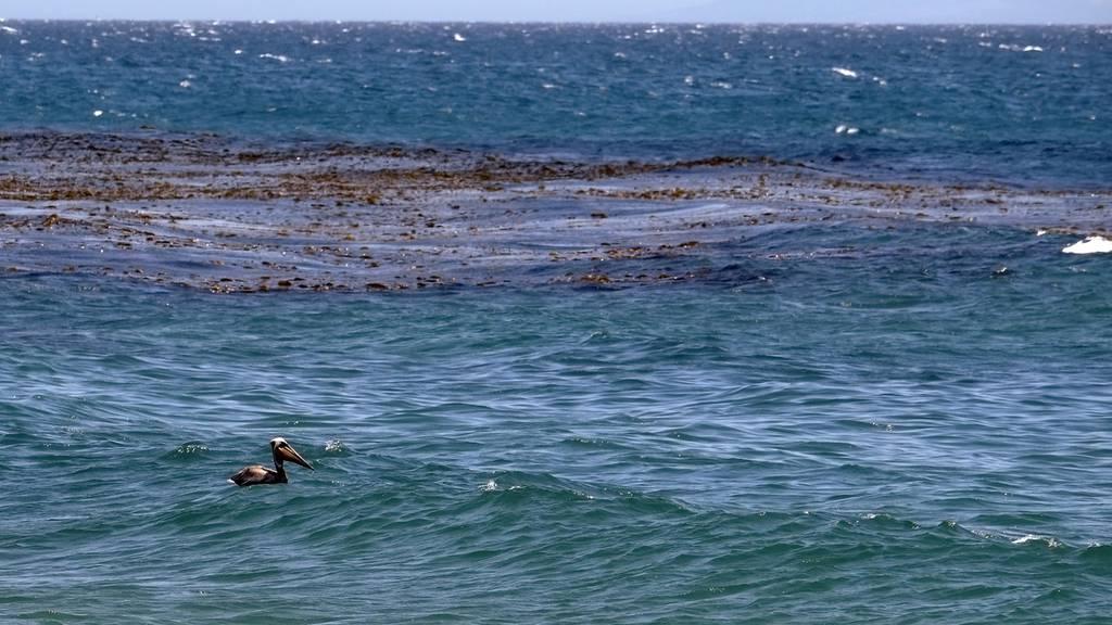 Leck in einer Pipeline: Ölteppich bedroht kalifornische Küste