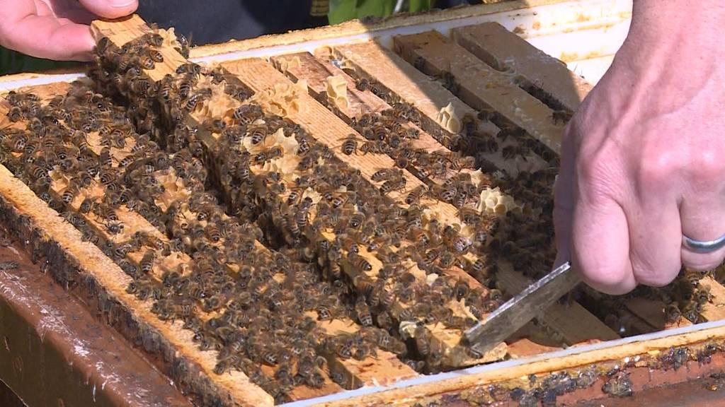 Diebe stehlen Bienenvölker