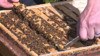 Philipp Heller traute seinen Augen nicht, als er am Freitag zu seinen Bienenvölkern gehen wollte.