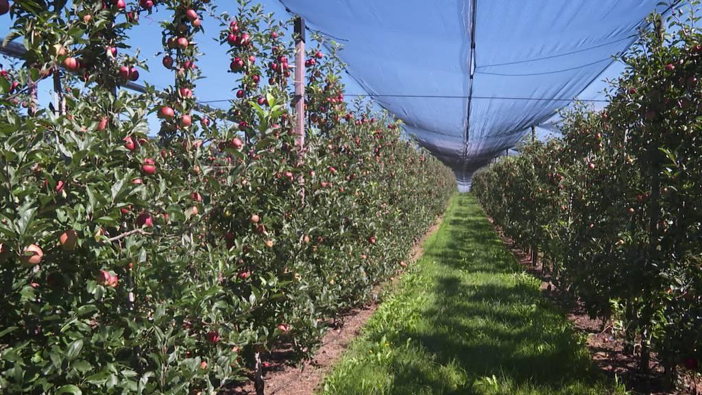 Grosse Unsicherheit: Bauern müssen ohne Rumänen auskommen