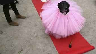 Halloween Dog Parade 2015 New York