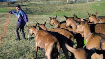 Bäuerin mit Ziegen in Guarda im Unterengadin (Archiv)