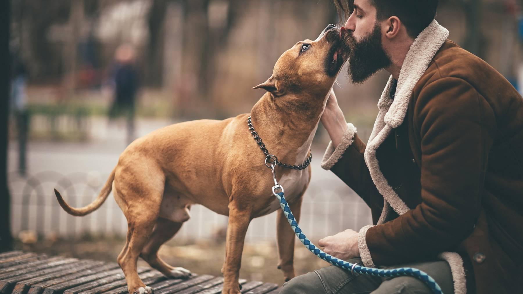 Das Fell eines Hundes ist hygienischer als der Bart eines Mannes.