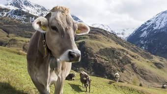 Bundesrat Johann N. Schneider-Ammann zur Agrarpolitik: «Die Landwirte müssen die Möglichkeit haben, innovativ zu sein.» (Symbolbild)