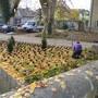 Derzeit läuft die Neubepflanzung im Kreuzackerpark.
