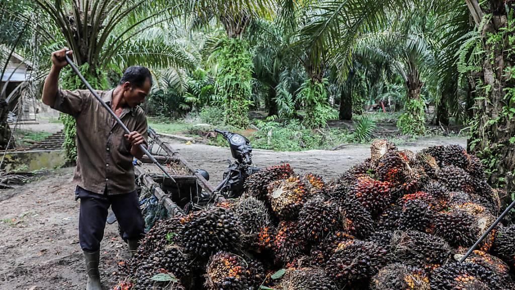 Kontrovers: Indien will Palmöl-Produktion ausbauen