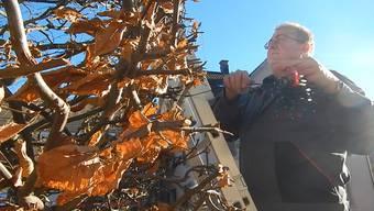Stefan Hartmann schmückt den Weihnachtsbaum in Schinznach-Dorf.