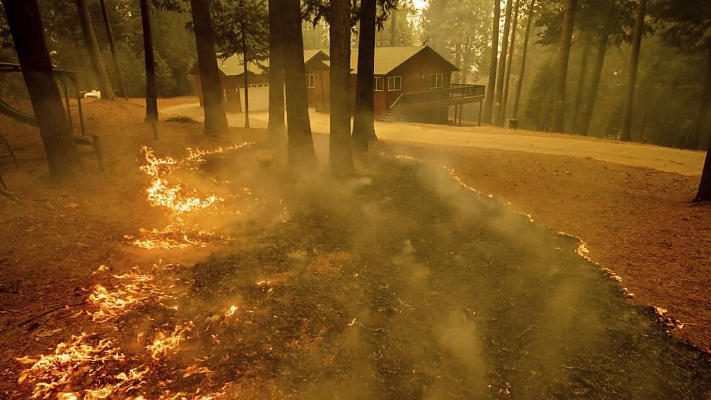 Neue Waldbrände wüten in Kalifornien - Viele Ortschaften bedroht