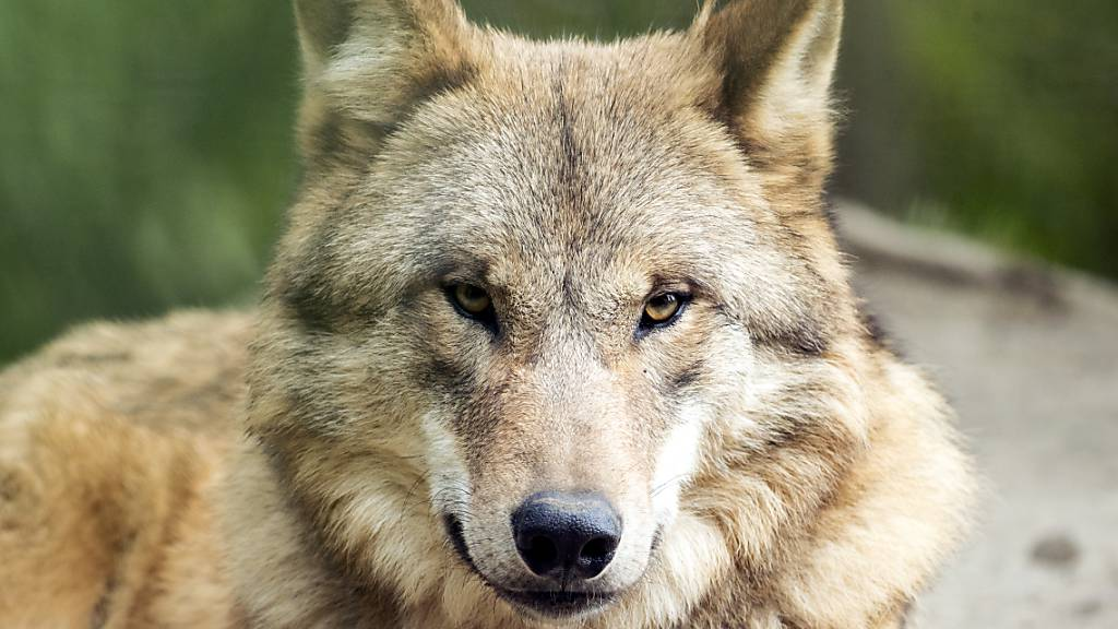 Was das Nein zum Jagdgesetz bedeutet