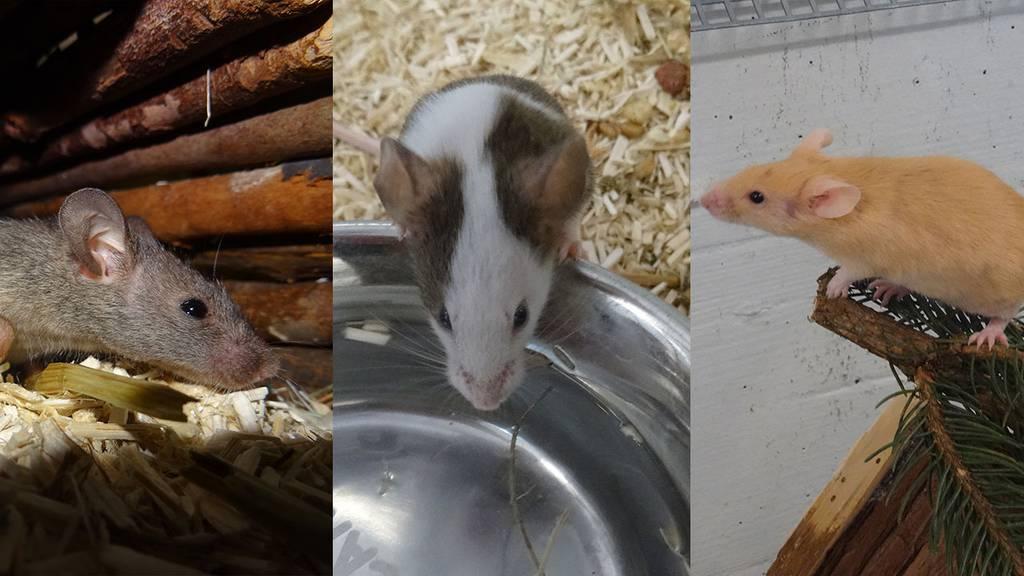 Mia, Flecki und Lena