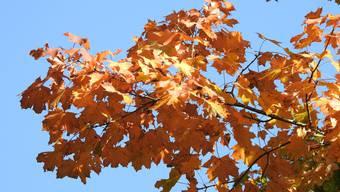 Der Oktober hat es in sich. (Archivbild)