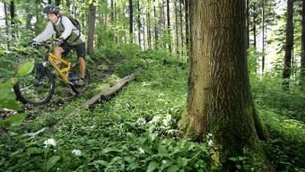 Erholungssuchende, Wanderer, Jogger, Biker – sie alle profitieren vom Einsatz und Aufwand der Waldbesitzer.