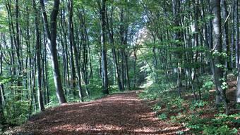 Der durchschnittliche Holzvorrat im Aargauer Wald hat sich seit 2005 nicht stark verändert und liegt bei 332 Kubikmetern Holz pro Hektare.