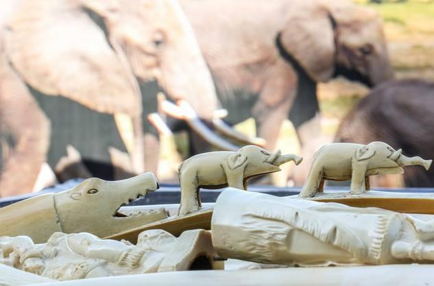 Ein grosses Problem ist der Handel mit Elfenbein: Laut dem Internationalen Tierschutz-Fonds wurden zwischen 2010 und 2012 über 100'000 Elefanten nur wegen ihres Elfenbeins getötet.