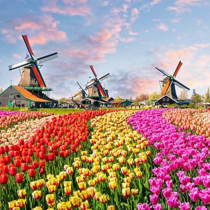 Ein Vorbild für den Bundesrat? Die Niederlande.