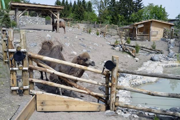 Neben Kamelen sind in der neuen Anlage auch Hausyaks und Kaschmirziegen zu Hause.
