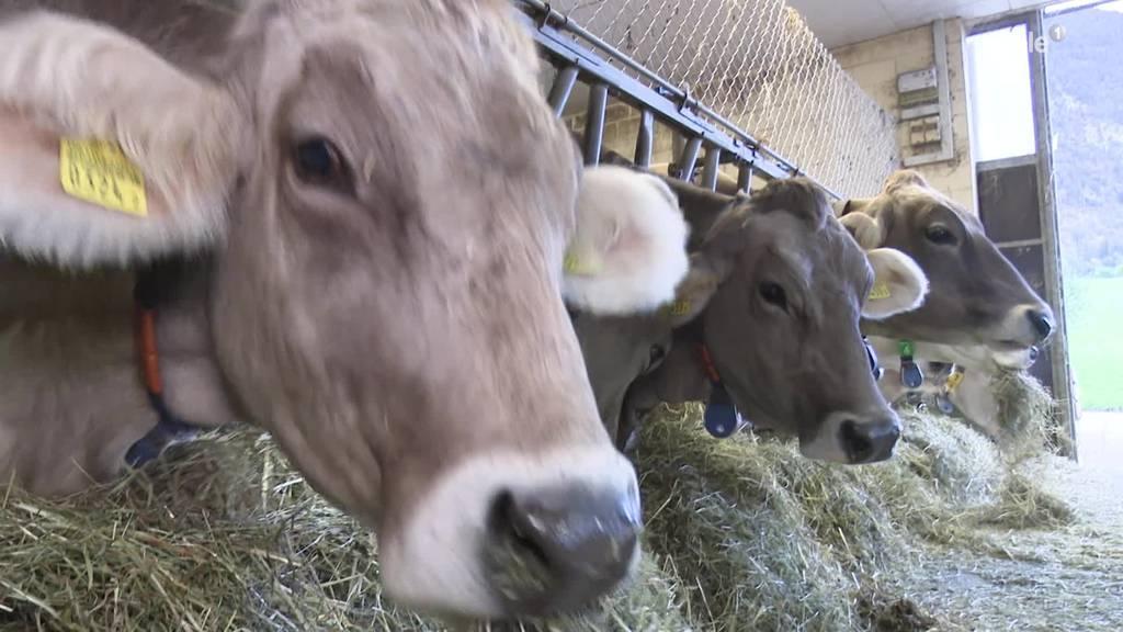 Bauern stellen sich gegen das Agrarprogramm des Bundes