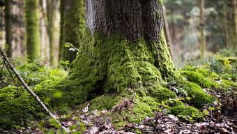 Entlang der Bäche sollen gerinnerelavante Schutzwälder errichtet werden. (Symbolbild)