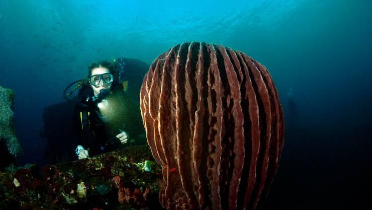 Die Solothurnerin liebt Tauchen. Das Unterwasserfoto hat ihr Vater gemacht.