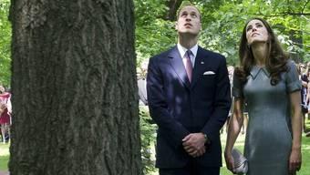 William und Kate betrachten eine uralte Tanne im Garten der königlichen Residenz in Kanada