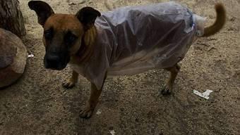 Auch für Haustiere wird vorgesorgt