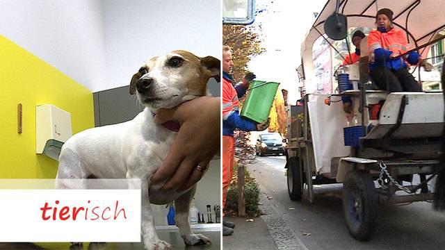 Hunde-Physiotherapie / Tierische Grünabfuhr
