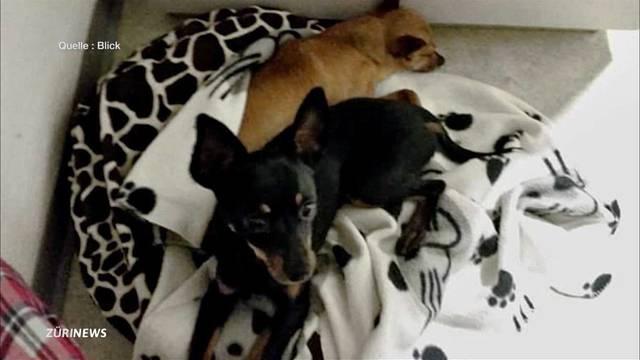 Ehepaar wegen Hundequälerei verurteilt
