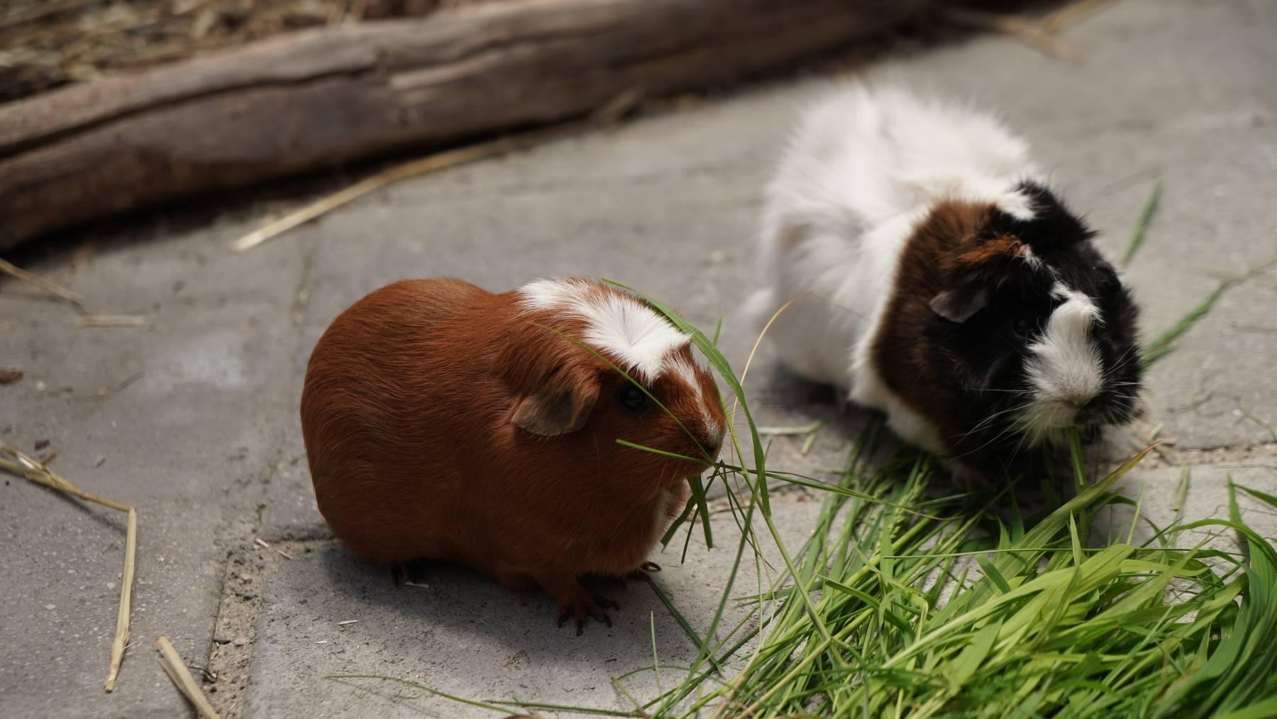 Alex und Hugo