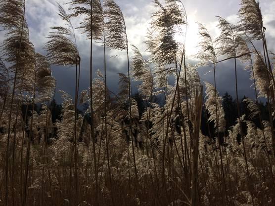 Dramatisch melancholische Stimmung an der Aare in Biberstein