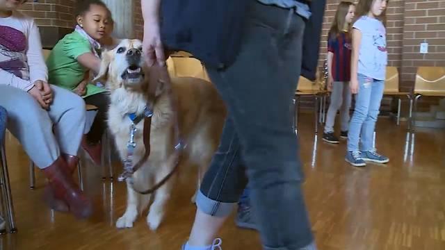 In den «Prevent A Bite»-Kursen üben Kindergärtler und Primarschüler das richtige Verhalten gegenüber Hunden.