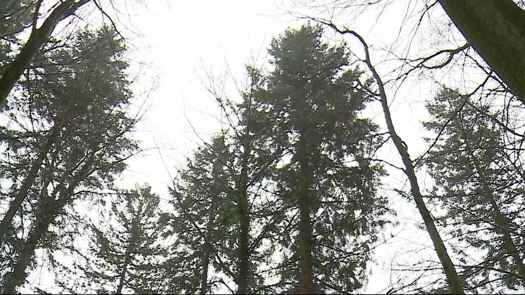 62 Meter: Gränichen, nicht das Val-de-Travers hat den Grössten