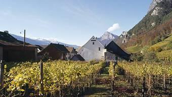 Weinreben bei Fläsch im Kanton Graubünden (Archiv)