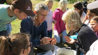 Die Kinder untersuchen Lebewesen aus dem Dorfbach.