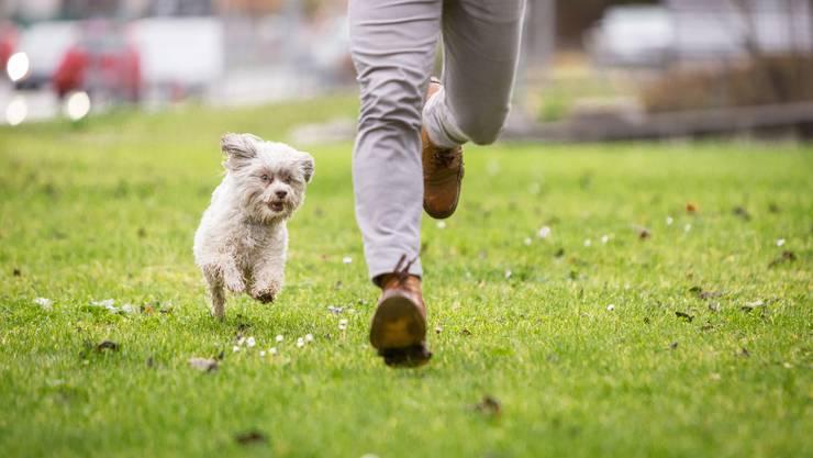 Streitende Nachbarn (23 Prozent), jaulende Haustiere (16 Prozent) und knatternde Rasenmäher (14 Prozent) stehen auf der Nerv-Liste zuoberst. (Symbolbild)